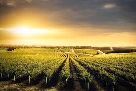 Adelaide hills wine region