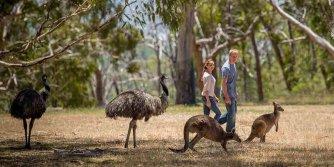 emus_kangaroos_cleland_wildlife_park