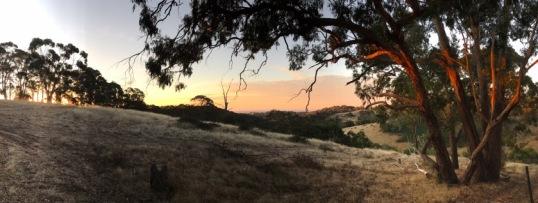 Paddock View
